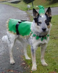 Dog Training Saanich Peninsula